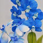 arthobbystudio lublin0004warsztaty foamiran kwiaty storczyk chryzantema pianka iranska 150x150