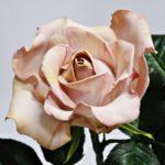 arthobbystudio lublin0008warsztaty foamiran lina roza 150x150