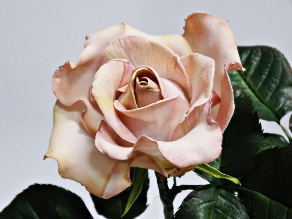 arthobbystudio lublin0008warsztaty foamiran lina roza