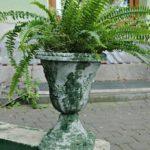 arthobbystudio lublin0017warsztaty efekt betonu mchu stylizacja ornament donica palacowa 150x150