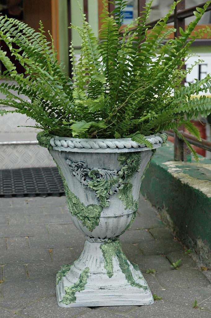 arthobbystudio lublin0018warsztaty efekt betonu mchu stylizacja ornament donica palacowa