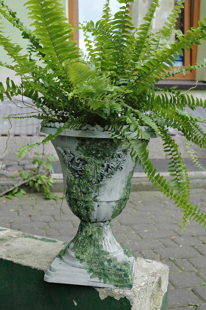 arthobbystudio lublin0019warsztaty efekt betonu mchu stylizacja ornament donica palacowa