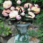 arthobbystudio lublin0004warsztaty foamiran kwiatyzfoamiranu pianka piwonia 150x150