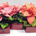 arthobbystudio warsztaty004 20191121foamiran kreatywna pianka kwiaty z foamiranu 150x150