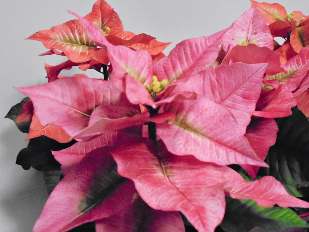 arthobbystudio warsztaty005 20191121foamiran kreatywna pianka kwiaty z foamiranu