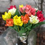 warsztaty84873650 2242165192754139 8439876775504248832 okwiaty z foamiranu lina shvets 150x150