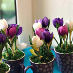 warsztatyindekskwiaty z foamiranu lina shvets 150x150